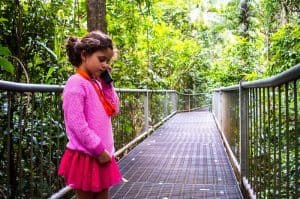 Daintree Discovery Centre | Things to do in the Daintree