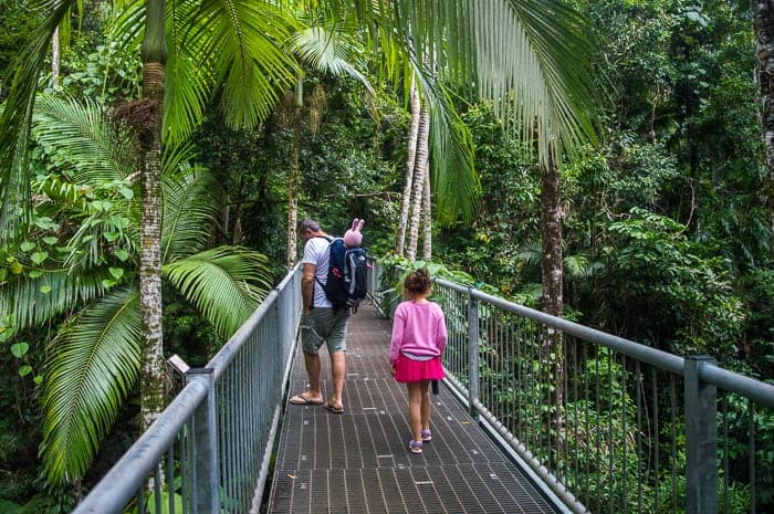 Daintree Discovery Centre | Daintree Rainforest Tours