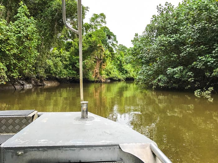 Daintree River Cruises | Daintree Rainforest Tours