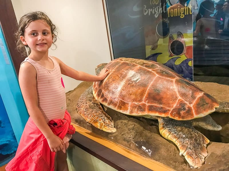 Turtle hatching Bundaberg