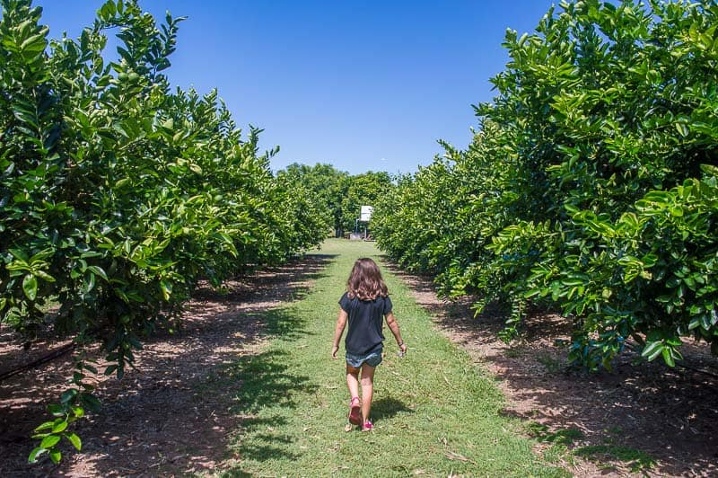 What to do in Bundaberg - Bundy Food Tours