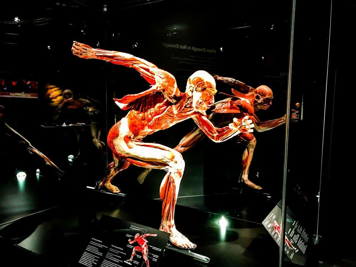 Body Worlds: Berlin sightseeing