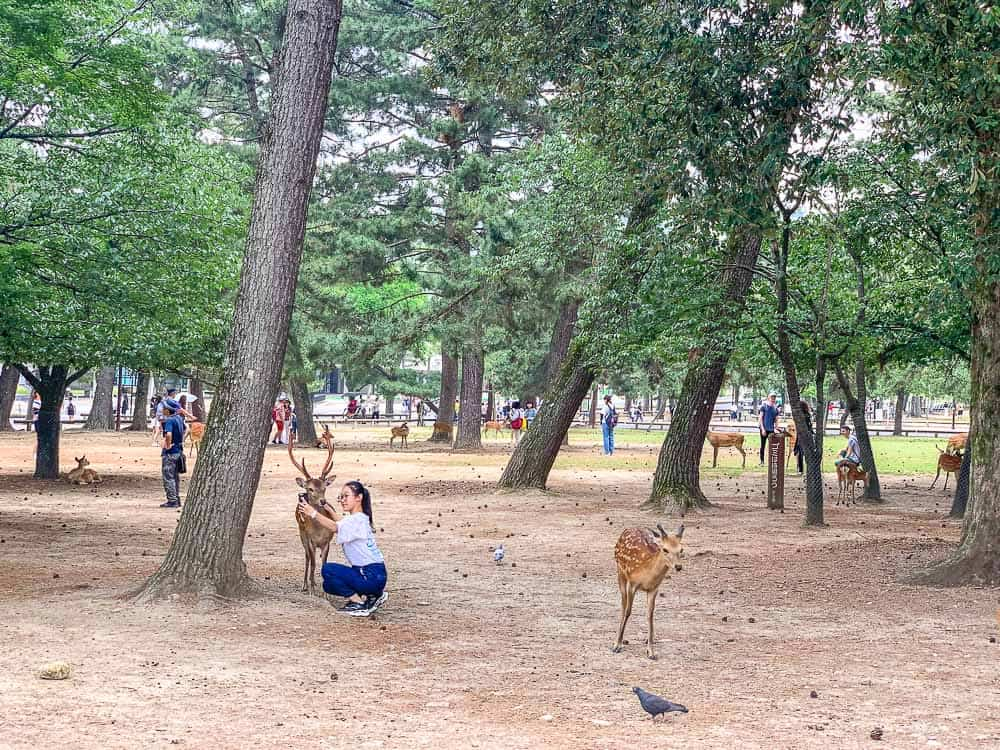 Nara Deer Park with kids