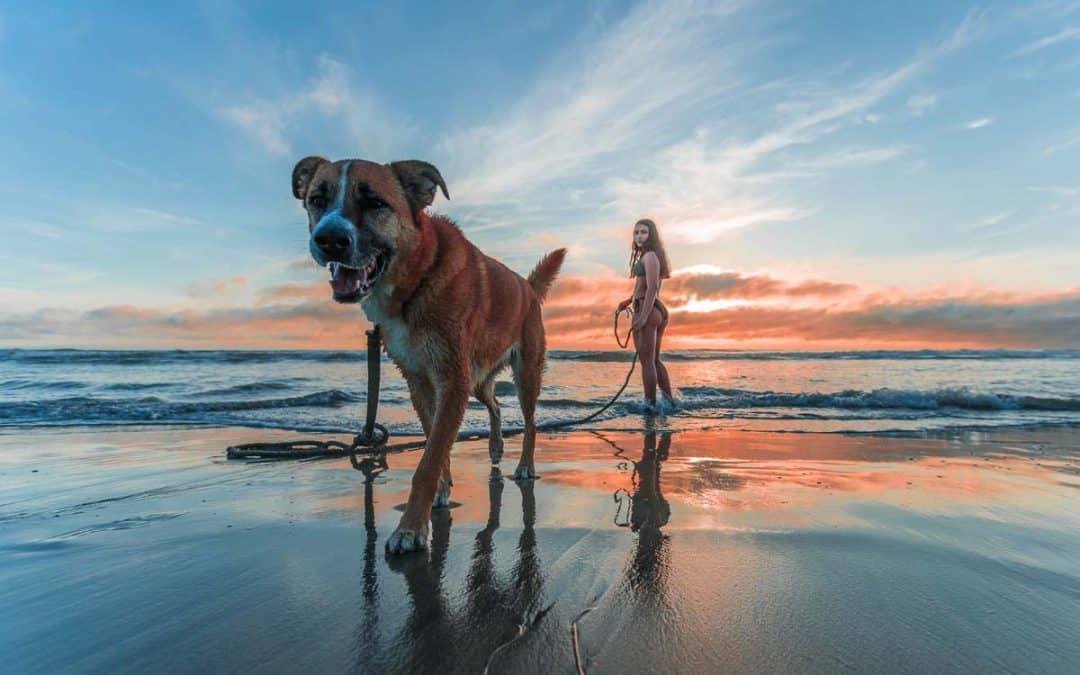 The Best Sunshine Coast Dog Friendly Accommodation (& Kid Friendly!!!)