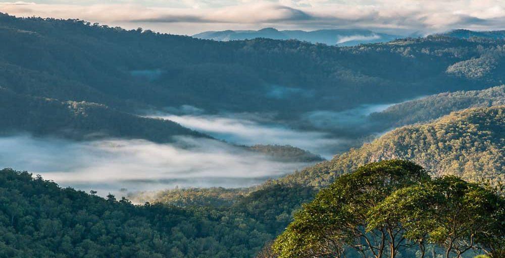 Mt Tamborine Lookout
