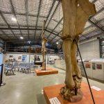 Eromanga:  See the Eromanga Dinosaur Museum & More!