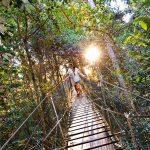 O'Reillys Rainforest Retreat Review