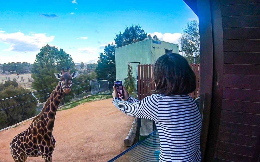 Jamala Wildlife Lodge Review